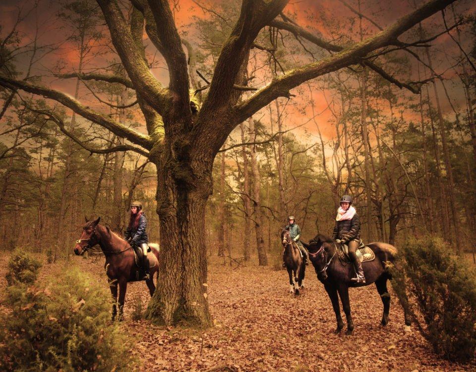 Grupa miłośników koni